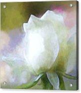 Sweet White Rose Acrylic Print