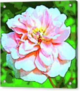 Sweetheart Rose On A Sunny Day Acrylic Print
