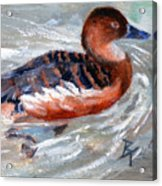 Swimming Aceo Acrylic Print