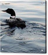 Swimming Away Acrylic Print