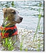 Swimming Family Dog Acrylic Print