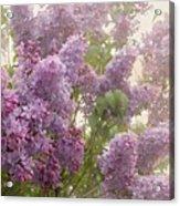 Swimming In A Sea Of Lilacs Acrylic Print