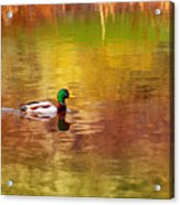Swimming In Reflections Acrylic Print