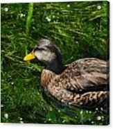 Swimming In The Grass Acrylic Print