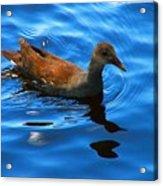 Swimming Acrylic Print