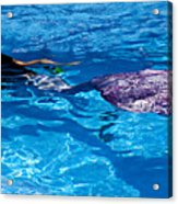 Swimming Mermaid Acrylic Print