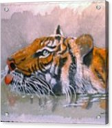 Swimming Tiger Acrylic Print