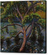 Swimming Tree Acrylic Print by Art Nomad Sandra  Hansen