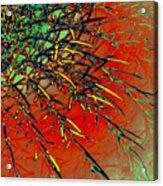 Swirl Barrel Cactus Acrylic Print