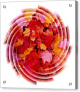 Swirling Colored Leaves Acrylic Print