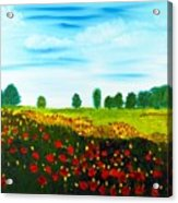 Swiss Poppies Acrylic Print