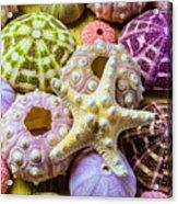 Syarfish And Sea Urchins Acrylic Print