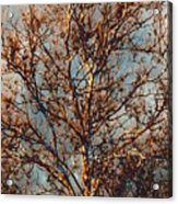 Sycamore Against November Sky Acrylic Print