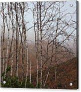 Sycamore Canyon Trail In Rain Acrylic Print