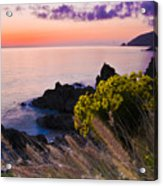 Sycamore Cove After Sunset Acrylic Print