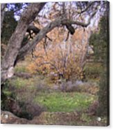 Sycamore Grove Fall Acrylic Print