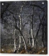 Sycamore Grove Acrylic Print