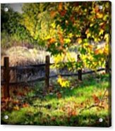 Sycamore Grove Series 11 Acrylic Print