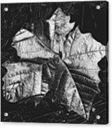 Sycamore Leaf Digital Acrylic Print