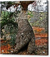 Sycamore Tree And Fall Leaves Acrylic Print