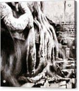 Sycamore Tree Overgrowing Ruins- Cambodia Acrylic Print