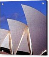 Sydney Harbor Fins Acrylic Print