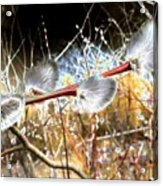 Symbol Of Spring Acrylic Print