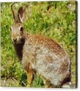 Symbol Of The Rabbit Acrylic Print
