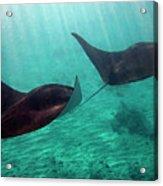 Synchronized Swimming Acrylic Print