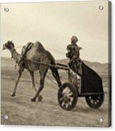 Syria: Camel Race, C1938 Acrylic Print