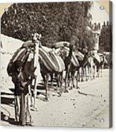 Syria: Caravan, C1900 Acrylic Print