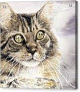 Tabby Cat Jellybean Acrylic Print