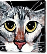 Tabby Eyes Acrylic Print