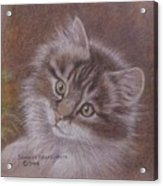 Tabby Kitten Acrylic Print by Dorothy Coatsworth