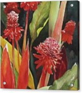 Tahiti Red Acrylic Print