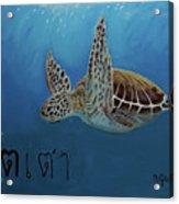 Tahow Sea Turtle Acrylic Print