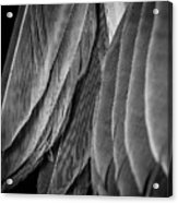 Tail Feathers Abstract Acrylic Print