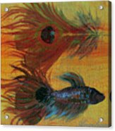 Tail Study Acrylic Print