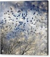 Taken Flight Acrylic Print