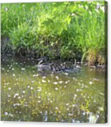 Taking A Stroll With Mom Troughs Floral Reflections Acrylic Print