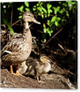 Taking Care Of Mom Acrylic Print