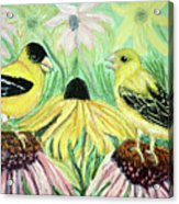 Talking Finches Acrylic Print