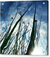 Talking Reeds Acrylic Print