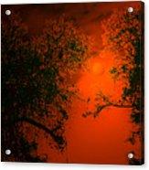Talking Trees Of Night Acrylic Print
