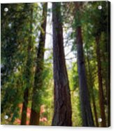 Tall And Mighty Acrylic Print