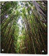 Tall Bamboo Acrylic Print