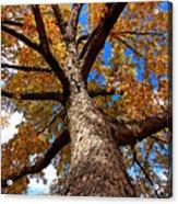 Tall Fall Tree Acrylic Print