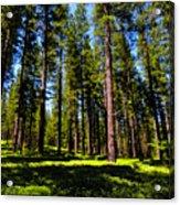 Tall Forest Acrylic Print