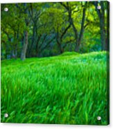 Tall Grass At Twilight Acrylic Print