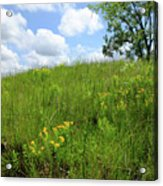 Tall Grass Hillside Acrylic Print by Scott Kingery